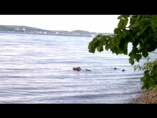 ути-ути-ути-ути-ути, какие маленькие, какие хорошенькие. плывём с мамкой, да с мАаааамкой плывём, с мааааамкой! :-) к тётеане,