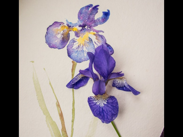 Paint an Iris flower in watercolor with Angela Fehr