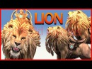 Lion King Finger Family Collection Nursery Rhymes   Dinosaurs Finger Family Short Movies In 3d
