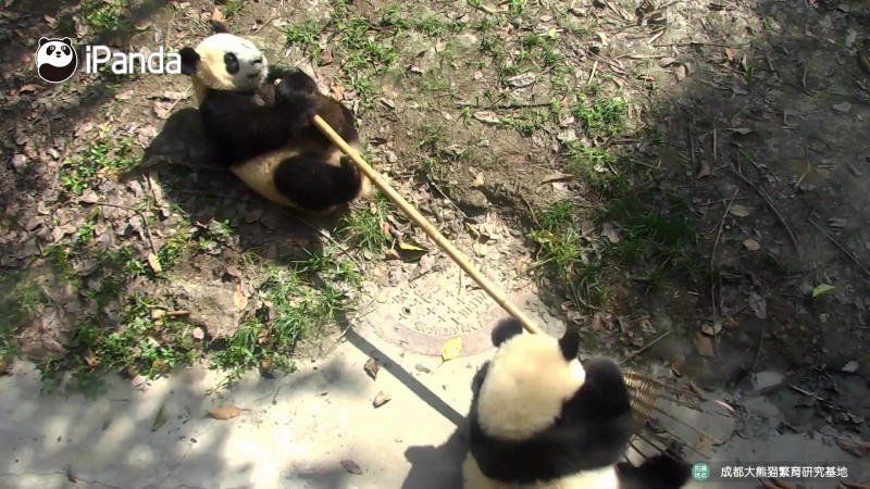 кто настоящяя Кунг-фу панда
