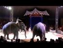 цирк братьев Гертнер (слоны)