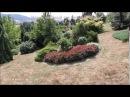 Чехия: хвойный сад Душана Горака.