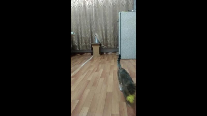 дрессированая кошка