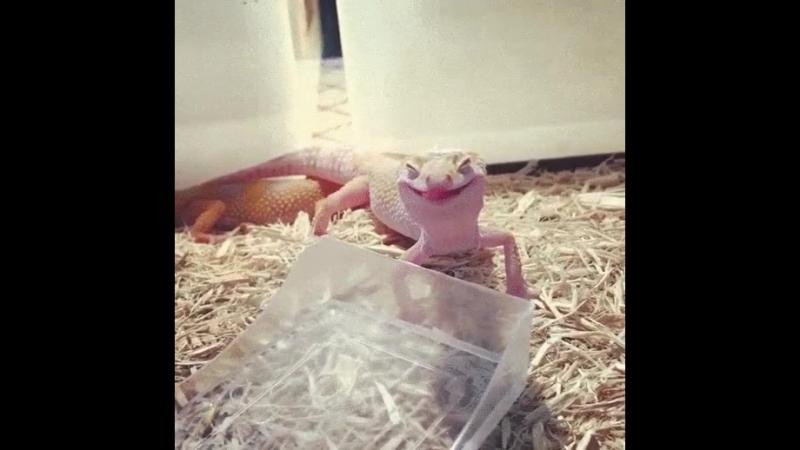 Налейте и мне того же что у этой ящерицы
