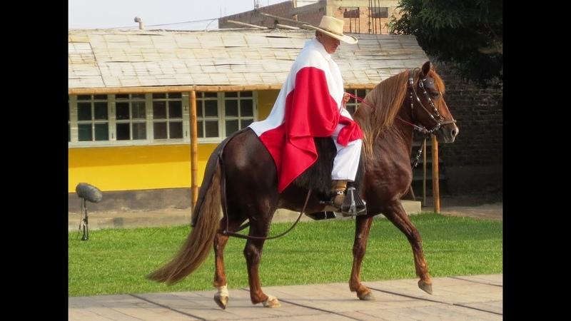 Reto del Caballo Peruano de Paso Landó y Huayno