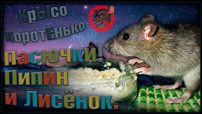 О Крысята пасючата Трехзубый Пипин и шилопопый Лисёнок Как дела Wild Rats