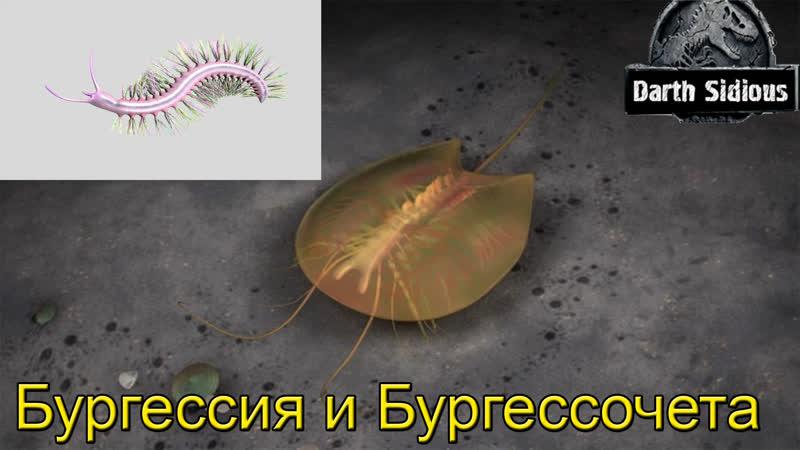 Развитие жизни на Земле The Evolution of Life Бургессия и Бургессочета