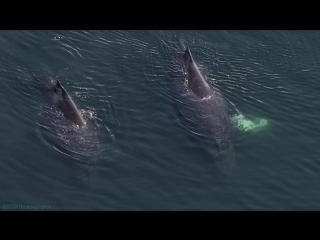 BBC Величайшие явления природы (6). Большой пир (Познавательный, животные, 2009)