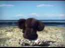 Where is Cheburashka Mind