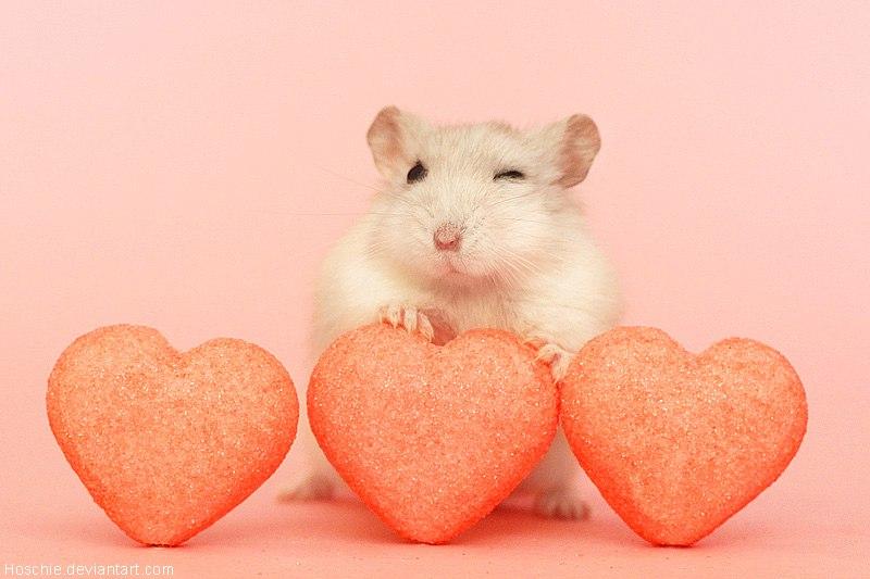 картинки с мышами люблю всегда изменение