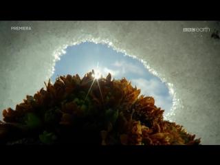 BBC: Чудеса времен года - Шпицберген (Свальбард) (2015) 2 серия из 3 | HD 720