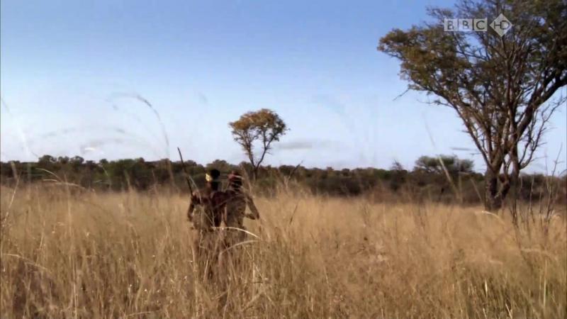 BBC Путешествие человека За пределами Африки 1 серия из 5 HD 720