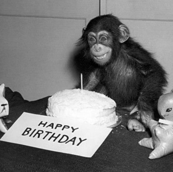 одной картинка обезьяны поют хэппи бездей успокоить тех, кто
