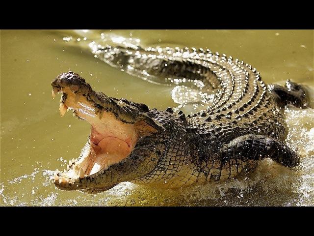 Дикая природа Дикий Нил Река царей National Geographic Wild