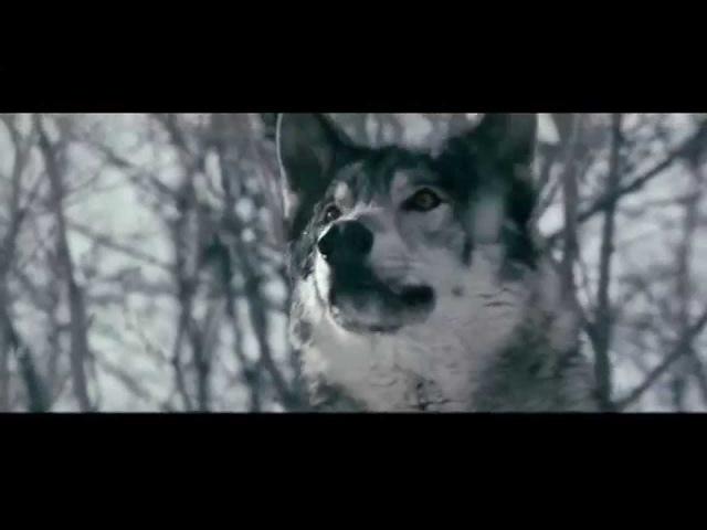 Александр Поручик Волчица