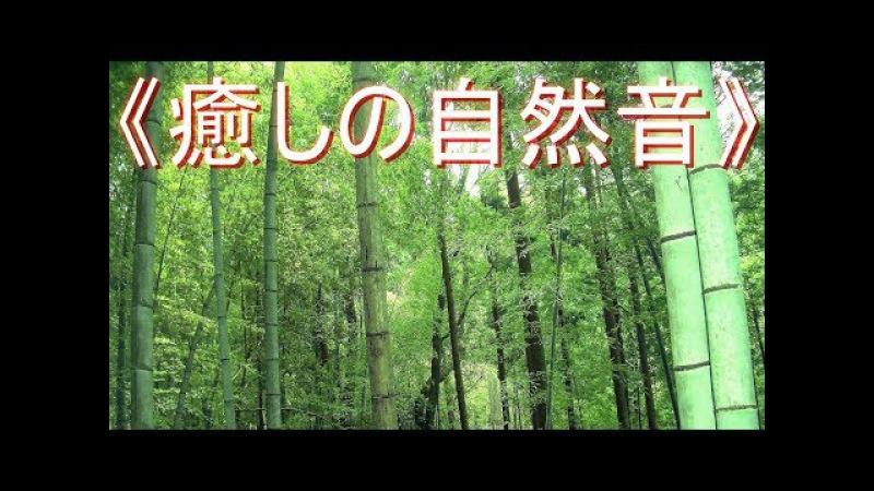 более тихие летние звуки《癒しの自然音》 森林編 野鳥 と セミ の鳴き声  リフレッシ 6