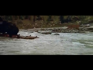 The Bear - Film by Jean-Jacques Annaud - копия