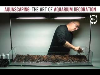 Fish-tank art