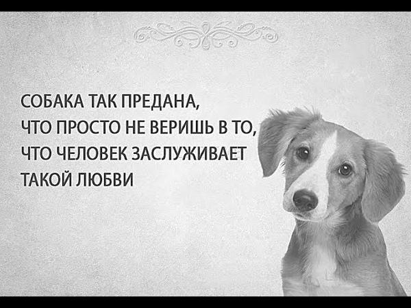 гигантское статусы и картинки про собак неотъемлемой