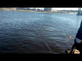 горбатый кит  г.Высоцк