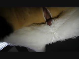 Fursuit sex #37