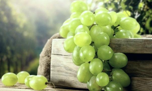 Виноград европейский    Ритуальное использование: Виноградная лоза -...