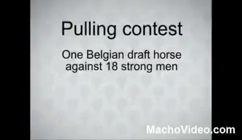 Лошадь против людей (вейтпуллинг)