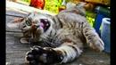 Смешные кошки 2019 Новые приколы с котами и собаками, смешные коты приколы 2019 Видео про кошек 70