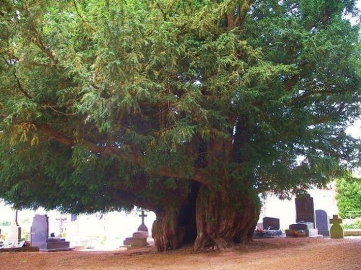 Опасные для жизни деревья, изображение №9