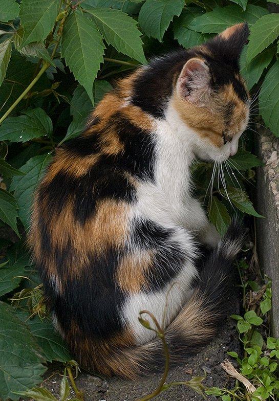 фото трехцветной кошки с котятами человеку нужно скачать
