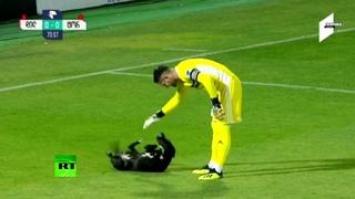 Пёс в игре: в Грузии собака выбежала на поле во время футбольного матча