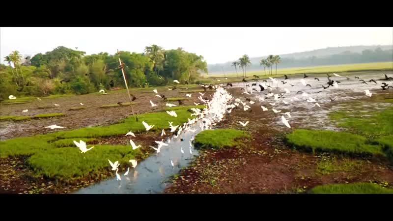 Drone Showreel Goa