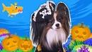 Halloween Baby Shark   Kids Songs and Nursery Rhymes   Halloween Songs from Yuki Lucky Dog