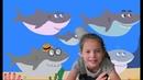 Малыш Акула поем Акуленок вместе с Мирой Детская развивающая песенка