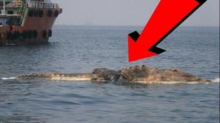 Эта история до сих пор волнует людей. Опять замечен подводный монстр у берегов Крыма.
