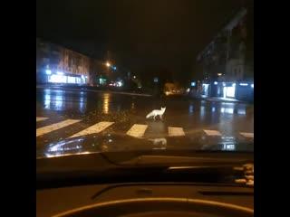 Саранск. Лисы в городе