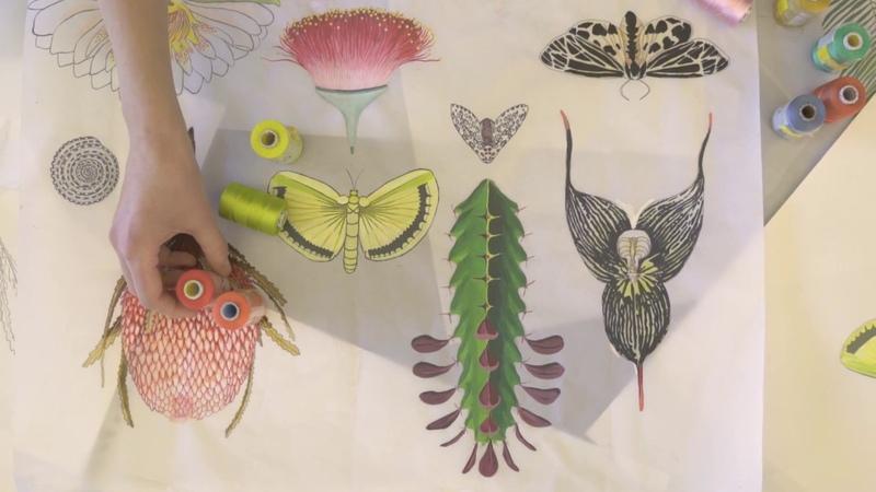 Pollack Presents Nature Lab Molly Haynes 14 TX