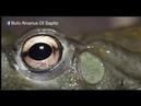 Documental sobre el Bufo Alvarius