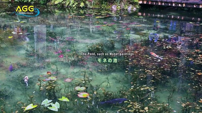 ❤Monet's Pond 💑