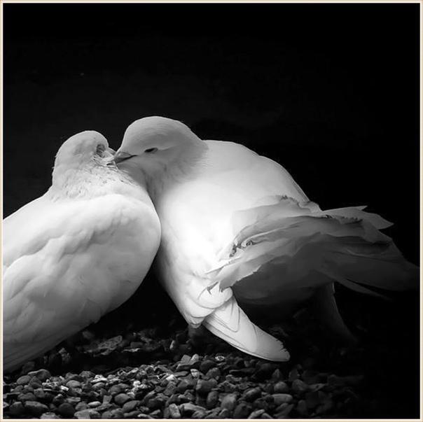 красно-белых белая птица любви картинки металлочерепица кровле