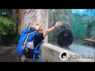 И кто тут обезьяна!