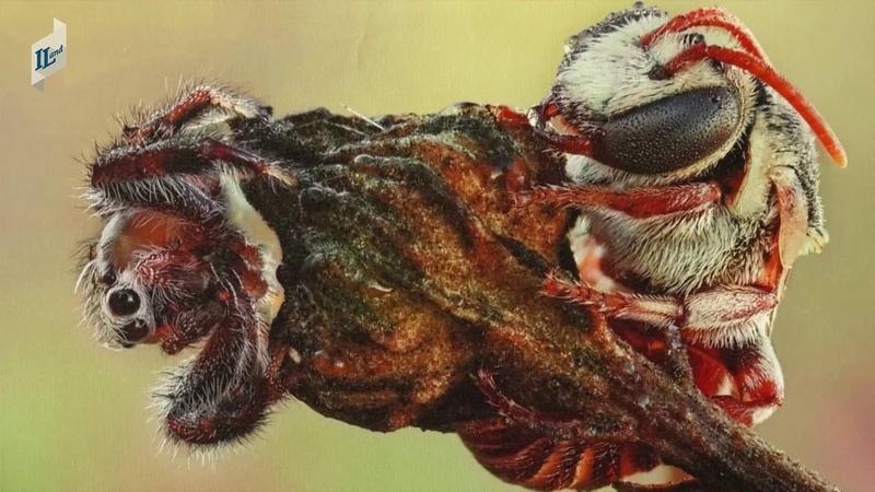 Выставка макрофотографии Мирона Карлинского волшебный мир насекомых