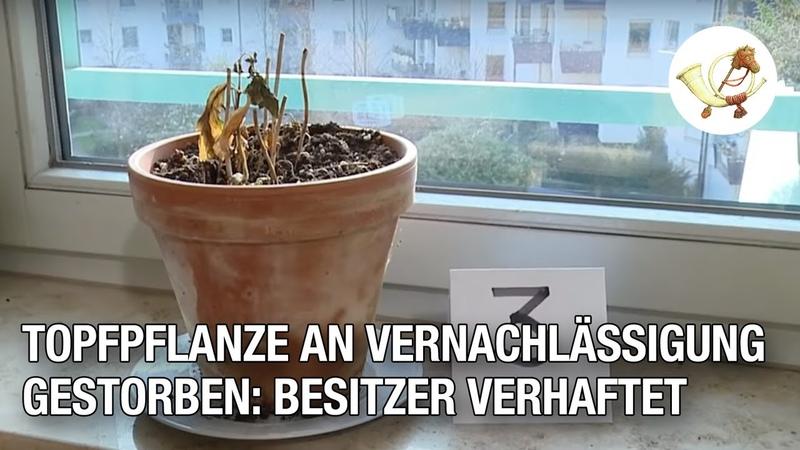 Topfpflanze an Vernachlässigung gestorben Besitzer verhaftet P24 Klassiker