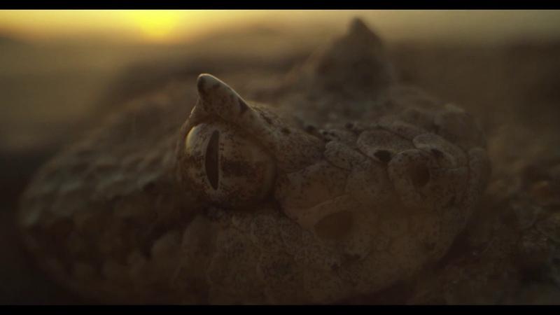 Laowa 24mm f14 Probe Lens Footage Snakes