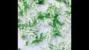 Иван-чай с цветом черёмухи: полезные свойства