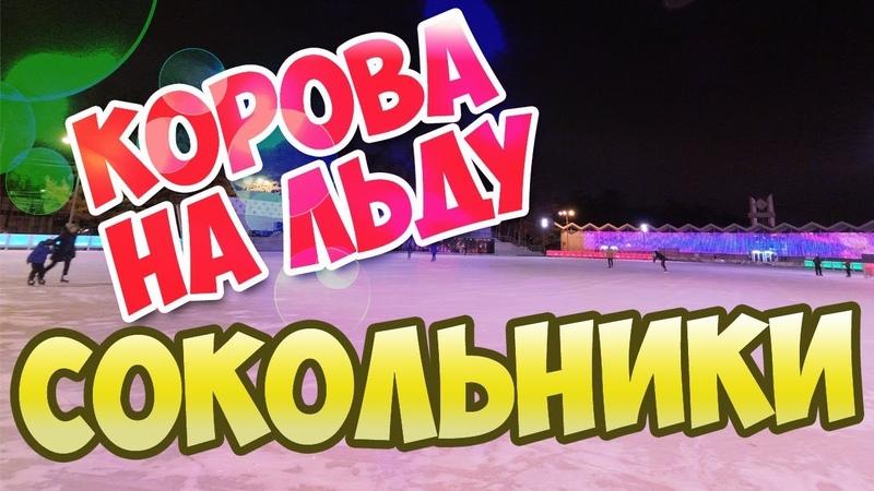 Каток Сокольники: Корова на льду с GoPro на лбу