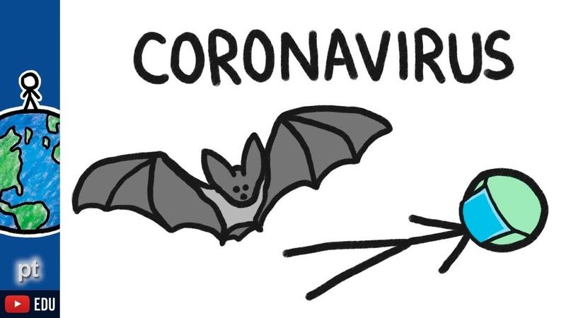 Por que os morcegos transmitem tantas doenças | Minuto da Terra
