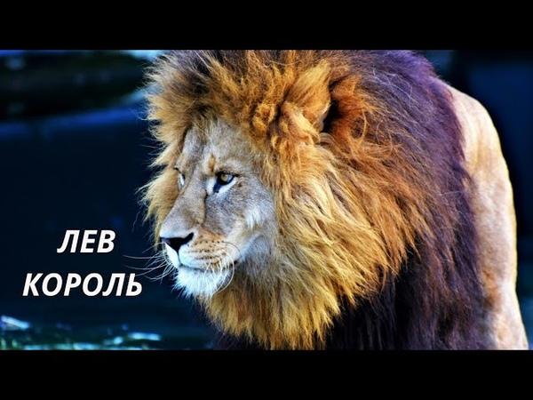 AFRO HOUSE - ЛЕВ ЦАРЬ ЗВЕРЕЙ.