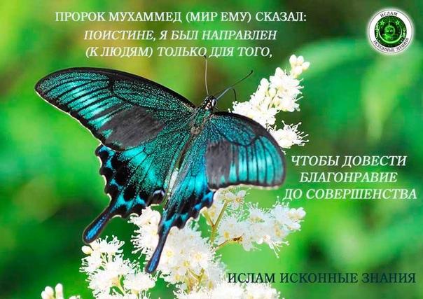 Обои Бабочек Скачать