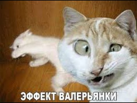 Funny cat Смешные КОТИКИ 12 11 2019 Its Possible to Watch Forever それは永遠に見ることが可能はい